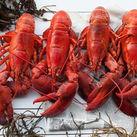Dinner For 4 – Live NS Lobster 1.25-1.5 lbers incl ...