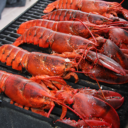 10 lb. – Live Nova Scotia Lobster 1.25-1.5 lbers incl ...